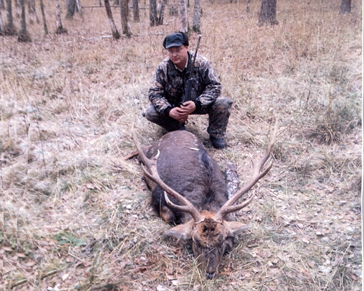 Sample Photo for Manchurian Sika Deer (typical)