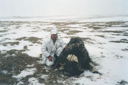 С. Ястрежембский с рекордным трофеем овцебыка. Фото www.scirecordbook.org ОК-САФАРИ