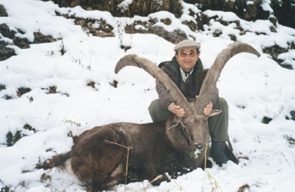 Sample Photo for Alpine Ibex