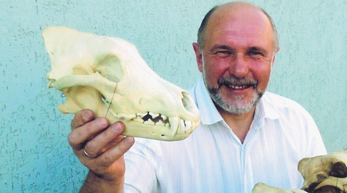 Рекордный трофей серого волка из Европы. www.scirecordbook.org