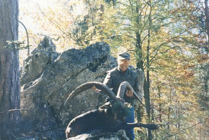 Sample Photo for Alpine Ibex