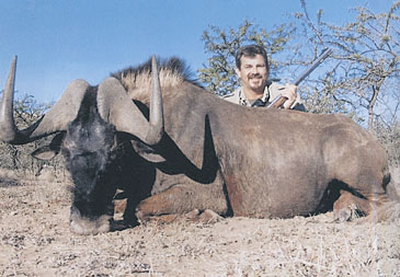 Sample Photo for Black Wildebeest