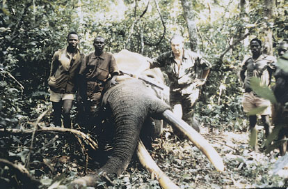Sample Photo for African Elephant