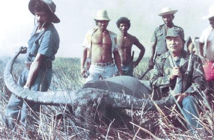 Sample Photo for Water Buffalo