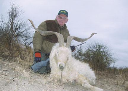 Sample Photo for Feral Goat