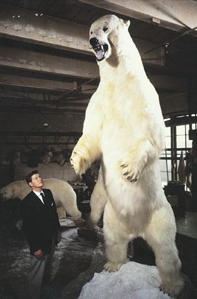 Image result for Tallest Polar Bear On Record