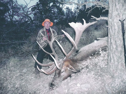 Sample Photo for Rocky Mountain Elk (typical)