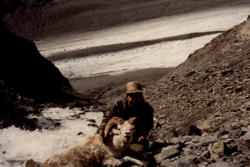 Sample Photo for Dall Sheep