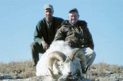 Sample Photo for Dall Sheep (estate)