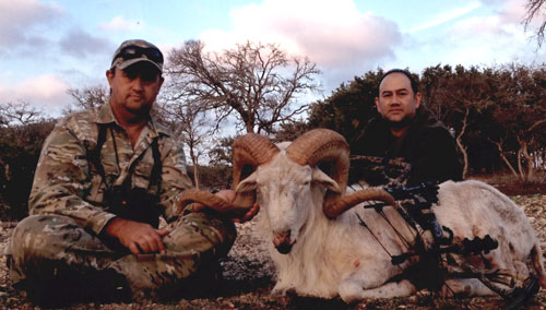Sample Photo for Texas Dall Sheep