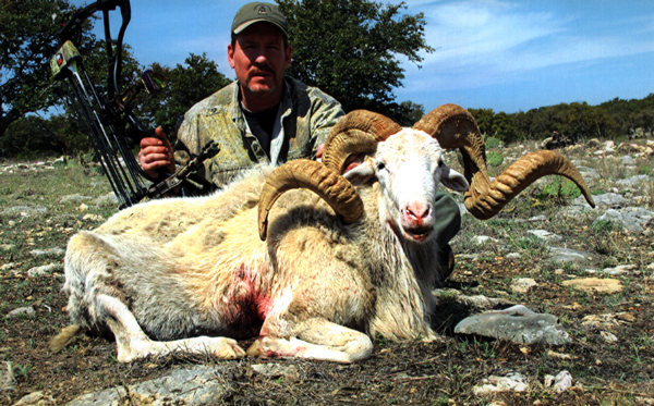 Sample Photo for Texas Dall Sheep