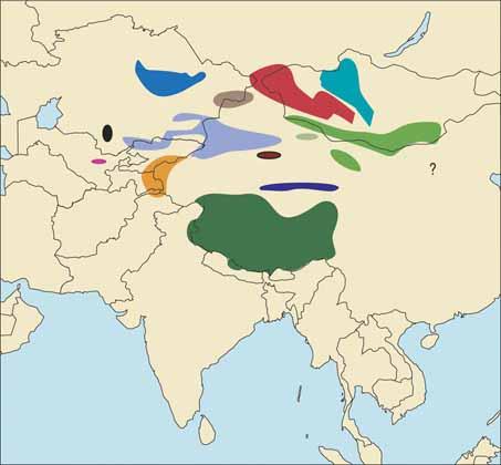 Northern China Argali