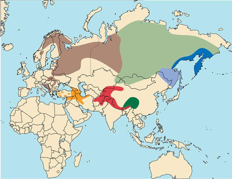 Ареал бурых медведей в Евразии по www.scirecordbook.org