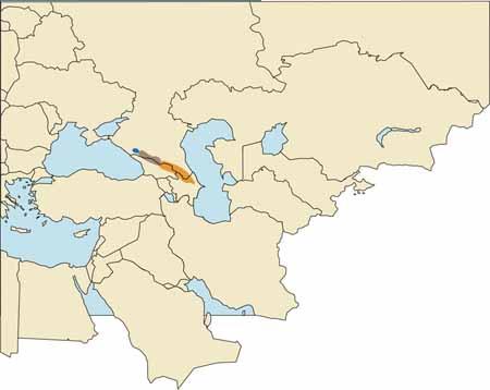 East Caucasian Tur