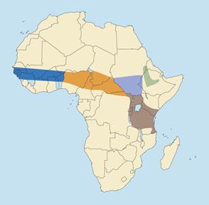 Abyssinian Bohor Reedbuck