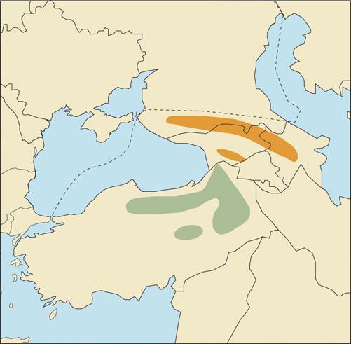 Caucasian Chamois