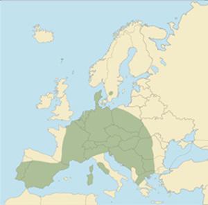 Схема ареала европейского муфлона. www.scirecordbook.org