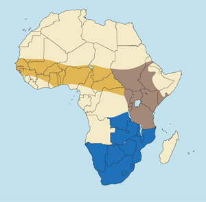 East African Bush Duiker