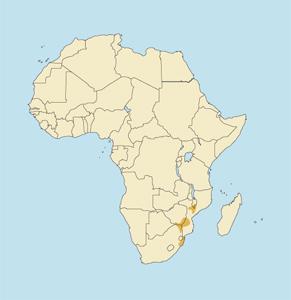 Common Nyala