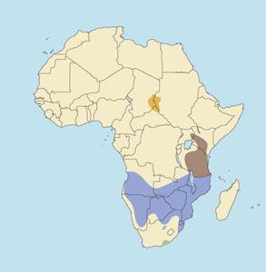 Southern Greater Kudu