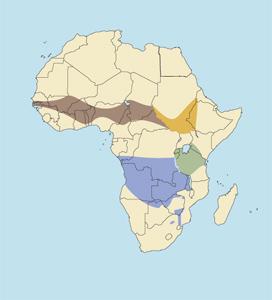 Western Roan Antelope