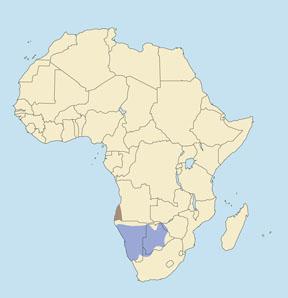 Angolan Gemsbok