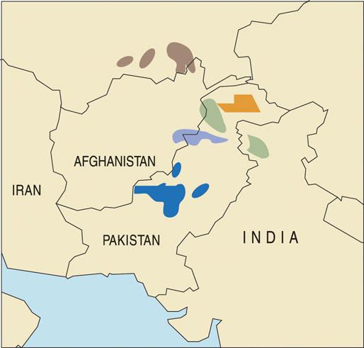 Bukharan Markhor