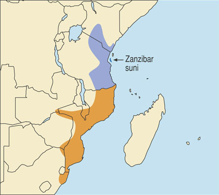 East African Suni